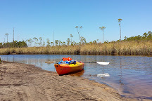Tate's Hell State Forest, Carrabelle, United States