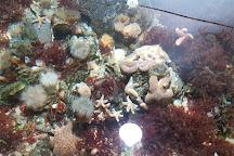 Nordseeaquarium Borkum, Borkum, Germany