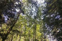 Gifford Pinchot National Forest, Washington State, United States