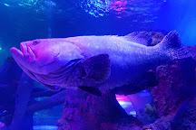 Loch Lomond Sea Life Aquarium, Balloch, United Kingdom