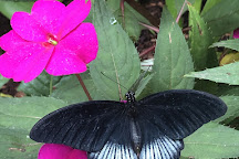 Butterfly World Coombs, Coombs, Canada