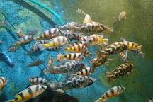 Aquarium, Batumi, Georgia