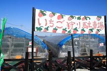 Yoshimura Strawberry Park, Mashiko-machi, Japan