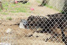 St Francis Wolf Sanctuary, Montgomery, United States