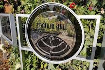 Dahlia Hill, Midland, United States