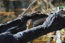 Gator Bait Adventure Tours, Myrtle Beach, United States