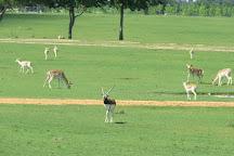 Global Wildlife Center, Folsom, United States