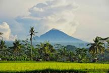 David Metcalf Photography, Ubud, Indonesia