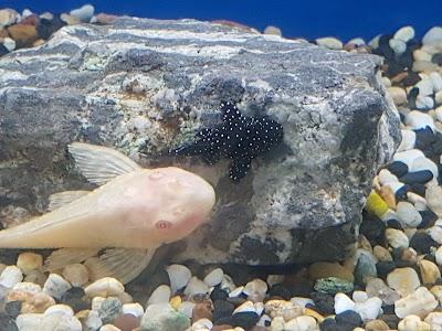 Clearwater Aquariums