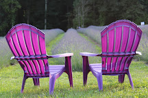 Hope Hill Lavender Farm, Pottsville, United States