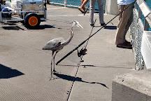 Okaloosa Island Pier, Fort Walton Beach, United States