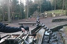 Whinlatter Forest Park, Braithwaite, United Kingdom
