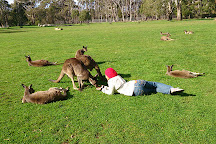 Cleland Wildlife Park, Crafers, Australia