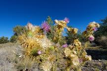 Desert National Wildlife Refuge, Las Vegas, United States