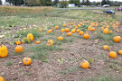 Behling Orchards