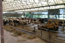 Escobar's Highland Farm, Portsmouth, United States