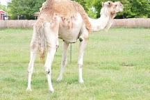Tupelo Buffalo Park & Zoo, Tupelo, United States