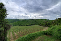 Winery Tour in Tuscany, Florence, Italy