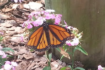 Panhandle Butterfly House, Navarre, United States