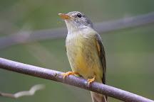 Birdwatching Tropical Australia, Mossman, Australia