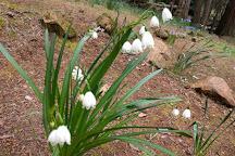 McLaughlin's Daffodil Hill, Jackson, United States