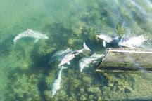 Adelaide Dolphin Sanctuary, Port Adelaide, Australia