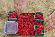 Childers' Raspberry Farm, Albany, United States
