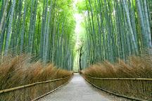Arashiyama Bamboo Grove, Kyoto, Japan