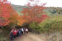 Bayrak Tepe Tabiat Parki, Samsun, Turkey