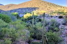 Tucson Mountain Park, Tucson, United States