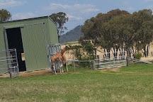 Darling Downs Zoo, Gatton, Australia