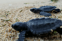 Turtle Conservation and Education Centre, Serangan, Indonesia