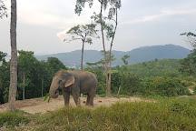 Baanchanghai Elephant Lovers, Phuket Town, Thailand