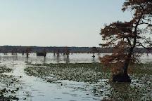 Reelfoot Lake, Tiptonville, United States