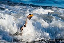 Sea Lion Island, Sea Lion Island, Falkland Islands