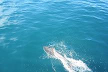 Whale Watch Kaikoura, Kaikoura, New Zealand