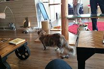 Cat Cafe Monta, Taito, Japan