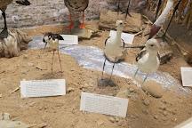 Cibola National Wildlife Refuge, Yuma, United States