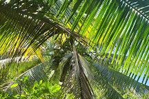 Hawaiian Organic Noni Farm, Kilauea, United States