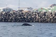 Whale Iceland, Keflavik, Iceland