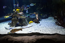 Aquarium Sea Life Paris Val D'Europe, Marne-la-Vallee, France