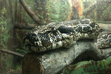 Great Lakes Zoological Society, Ann Arbor, United States