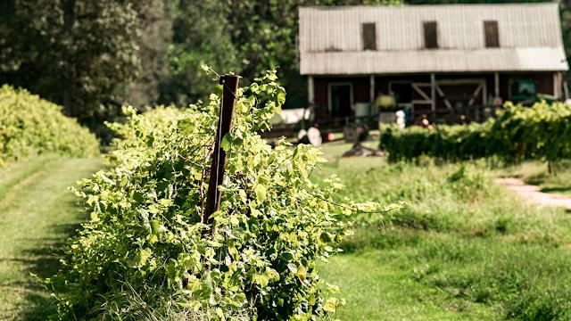Landry Vineyards