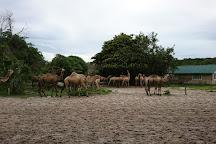Dar es Salaam Zoo, Dar es Salaam, Tanzania