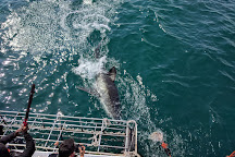 White Shark Africa, Mossel Bay, South Africa