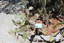 Jardin Botanico Dr. Alfredo Barrera Marin, Puerto Morelos, Mexico