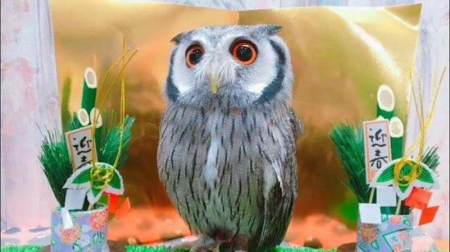 あうるぱーく フクロウカフェ池袋 (Owlpark owlcafe)