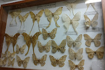 Museum of World Insects and Natural Wonders, Chiang Mai, Thailand
