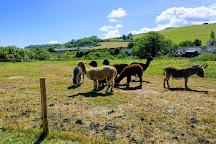 Doniford Farm Park, Watchet, United Kingdom