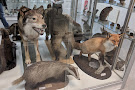 Pohjanmaan Museo - Osterbottens Museum